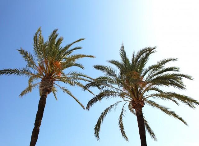 One Week in Mallorca