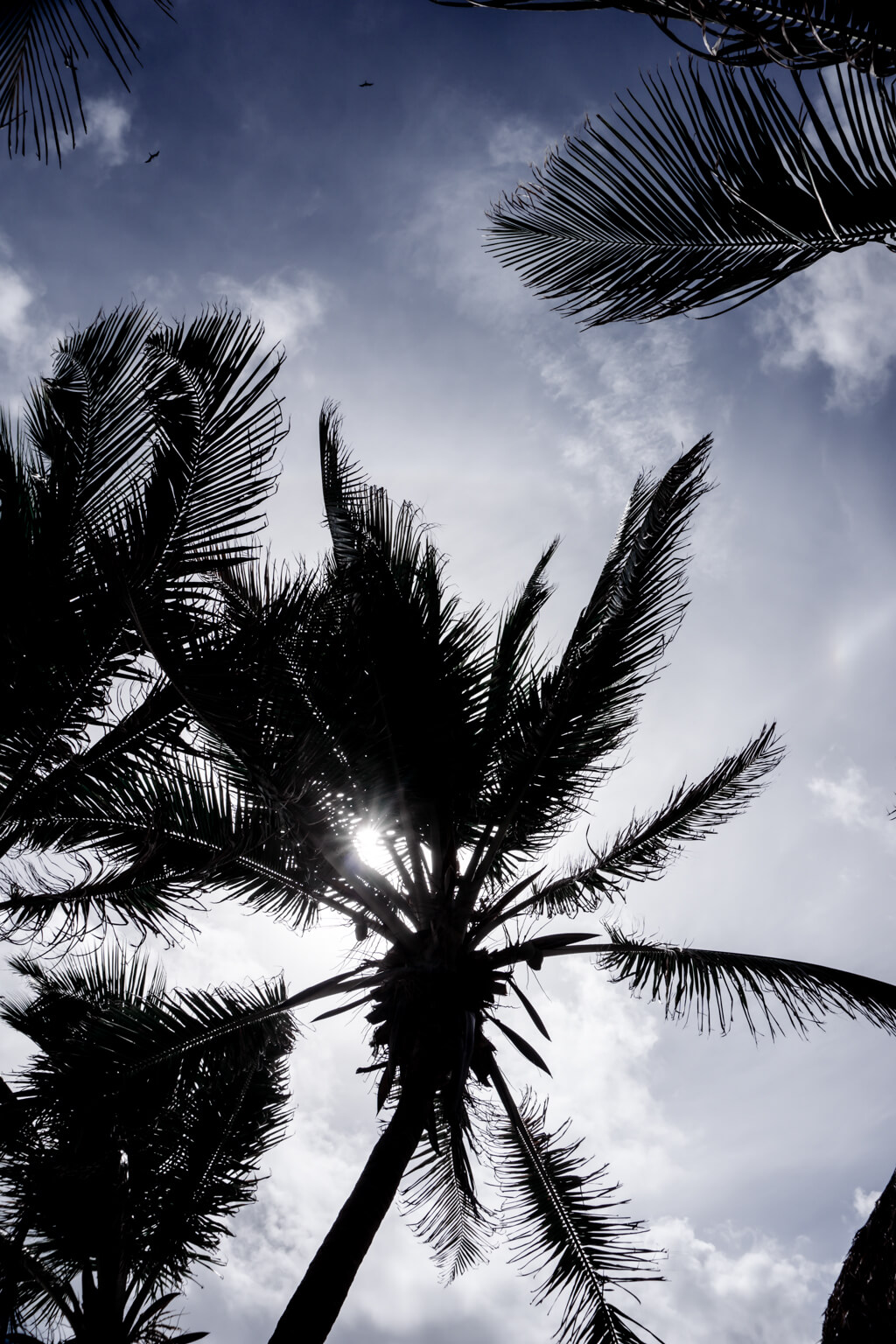 Tulum Palm Trees