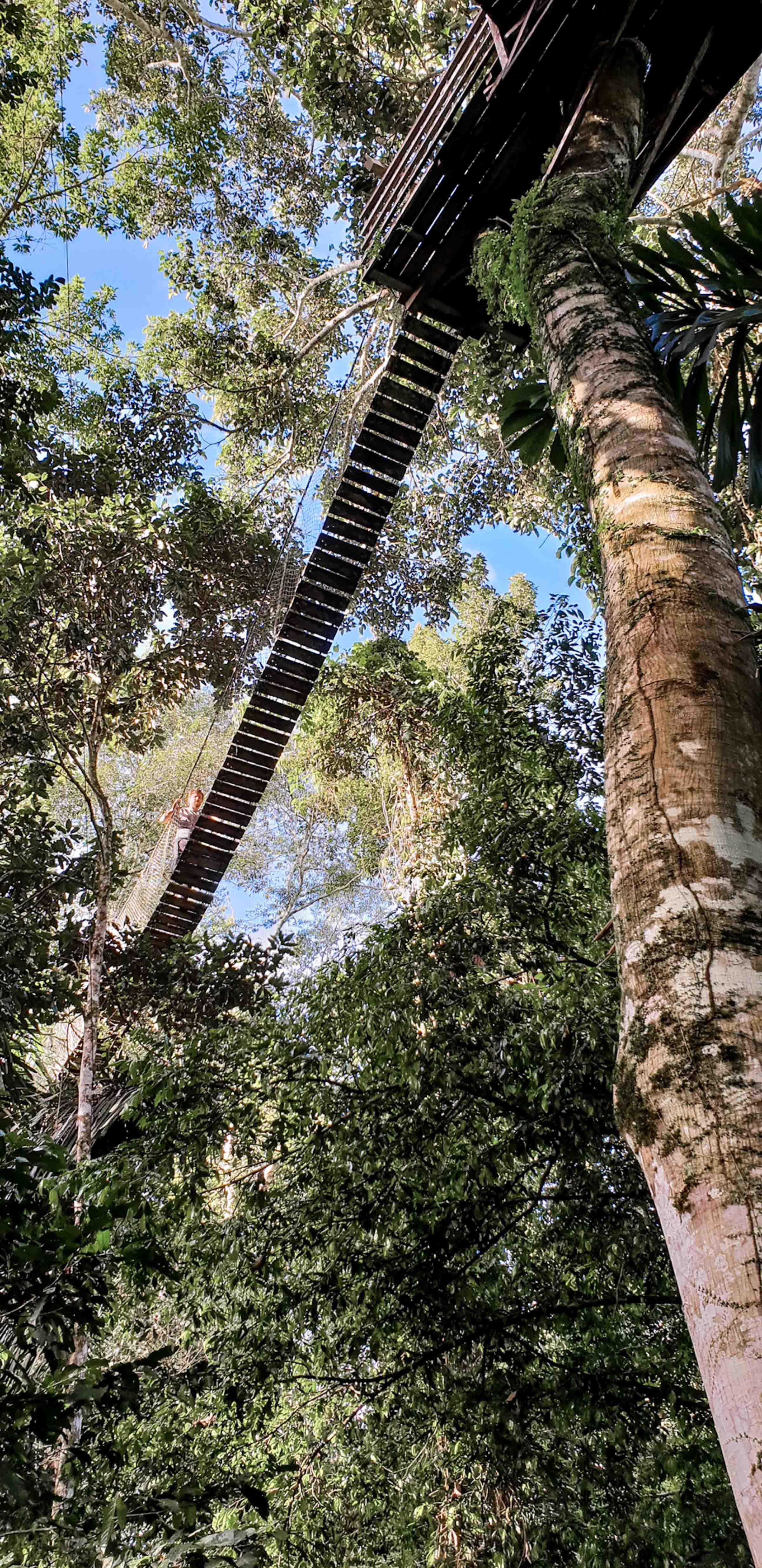 Hängende Brücken Dschungel Puerto Maldonado