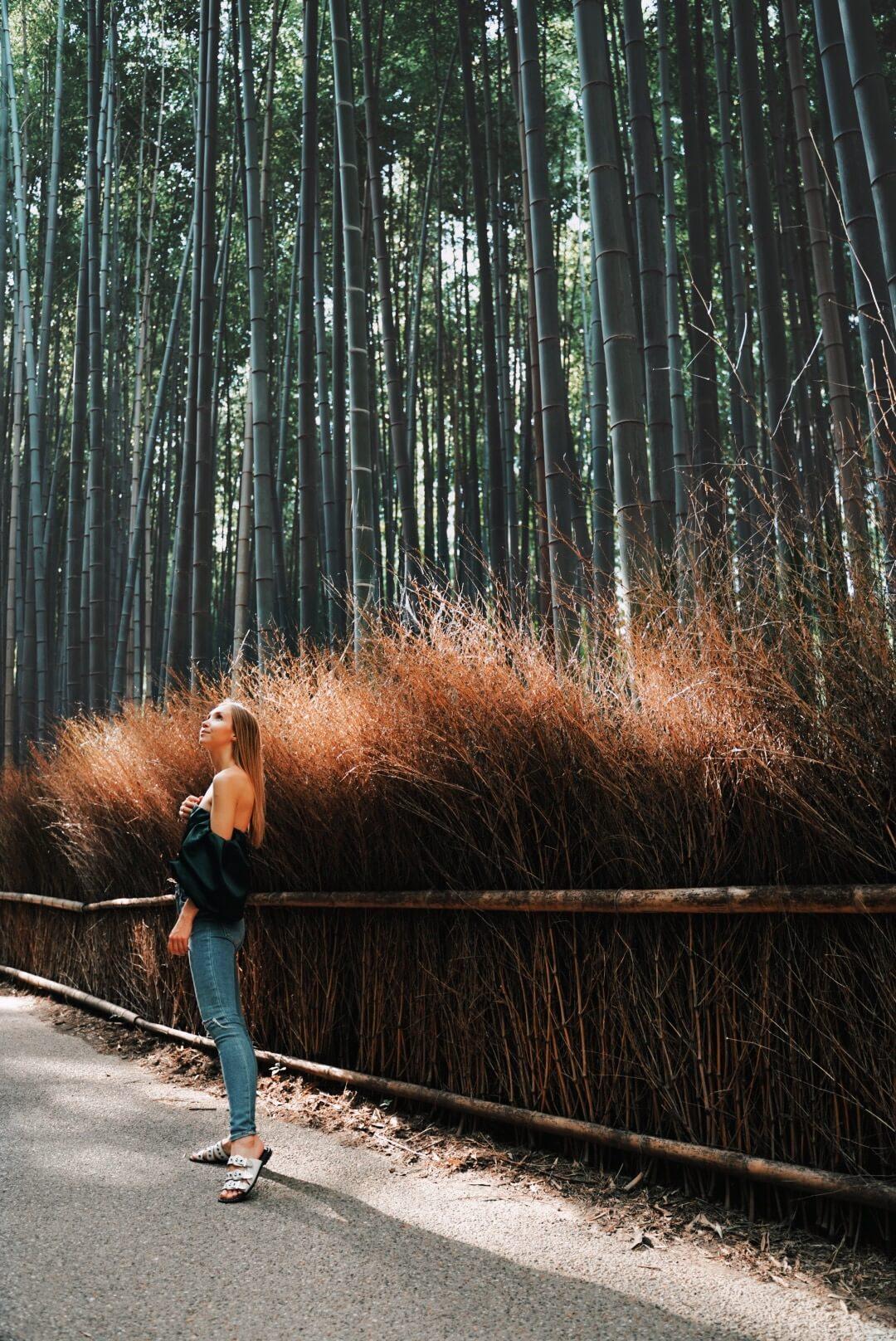 Kyoto Reisetipps Bambuswald